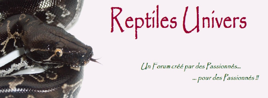 Reptiles Univers