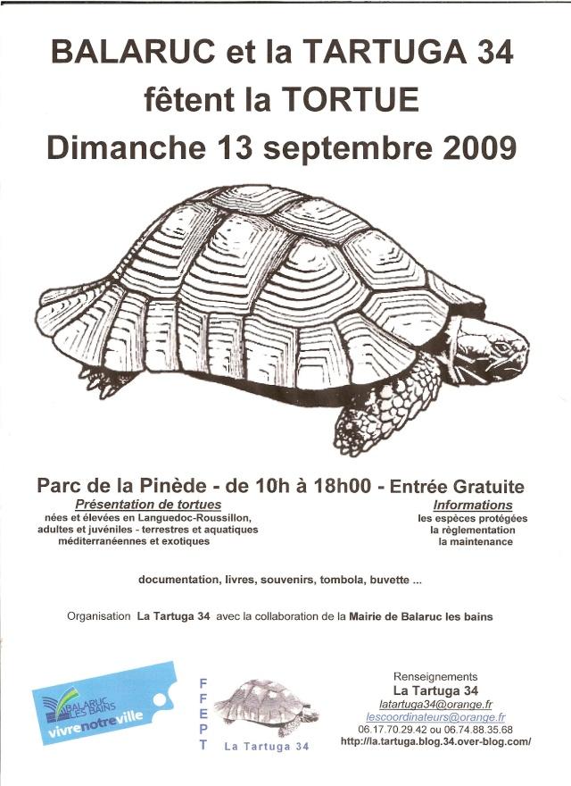 des tortues à Balaruc Scanne12