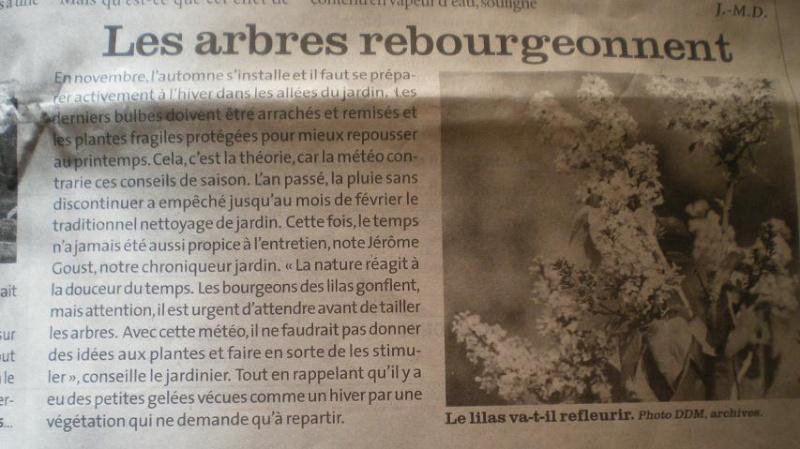 LA VEGETATION MEDITERRANEENNE - Page 2 Imgp8741