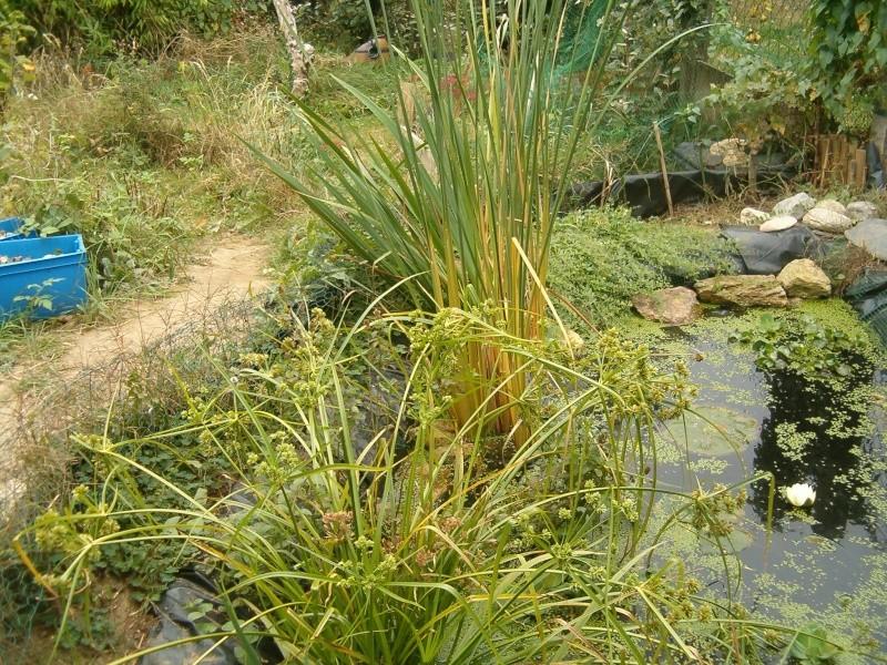 le bassin aux tortues au mois d'octobre Bassin12
