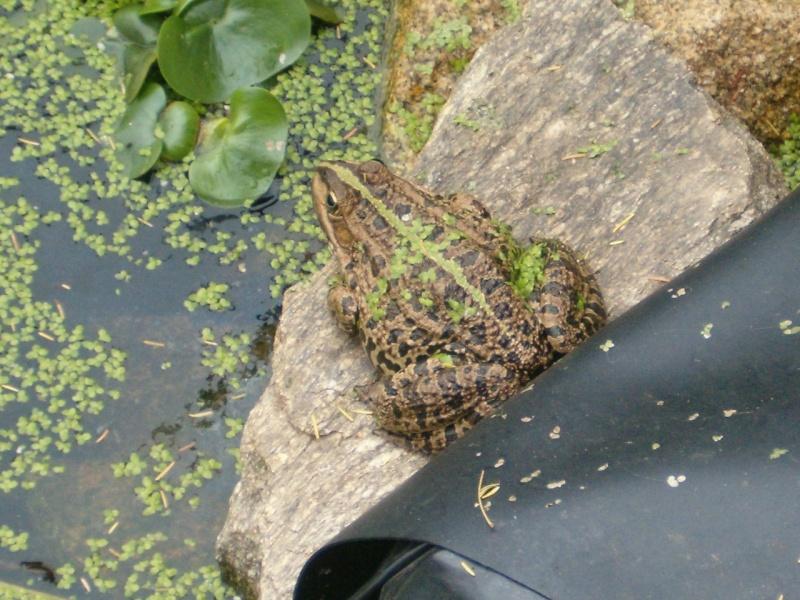 le bassin aux tortues au mois d'octobre Grenoc10