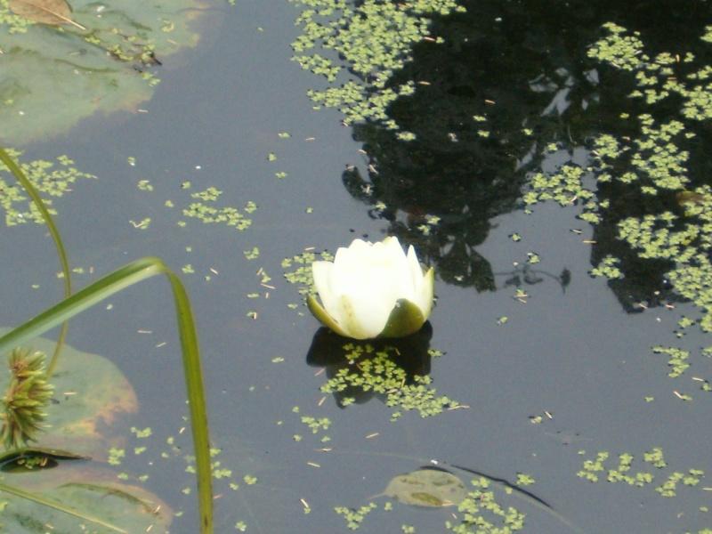 le bassin aux tortues au mois d'octobre Nenuoc10