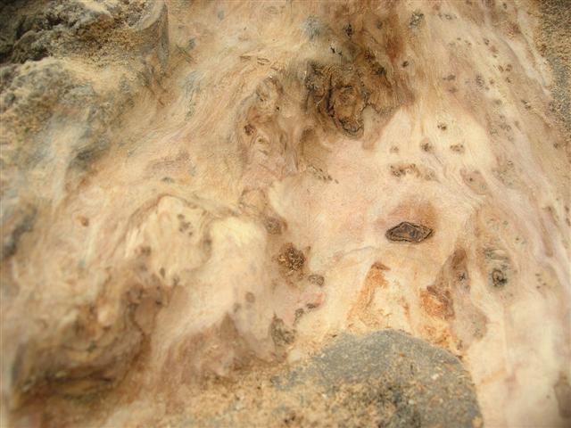 Travail du bois mort sur un olivier Detail10