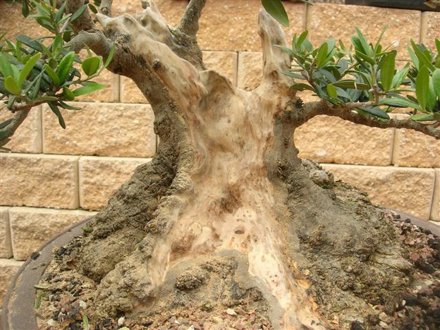 Travail du bois mort sur un olivier Result10