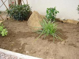 Des plantes, des bordures et... des pierres Dsc08422