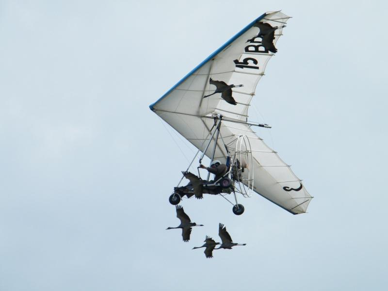Vol avec les oies à Polminhac Dscf5510