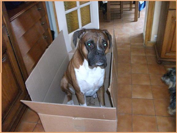 Forum des chiens Helene10