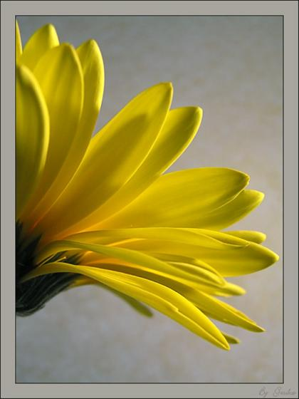 Bojim žutom - Page 2 1314