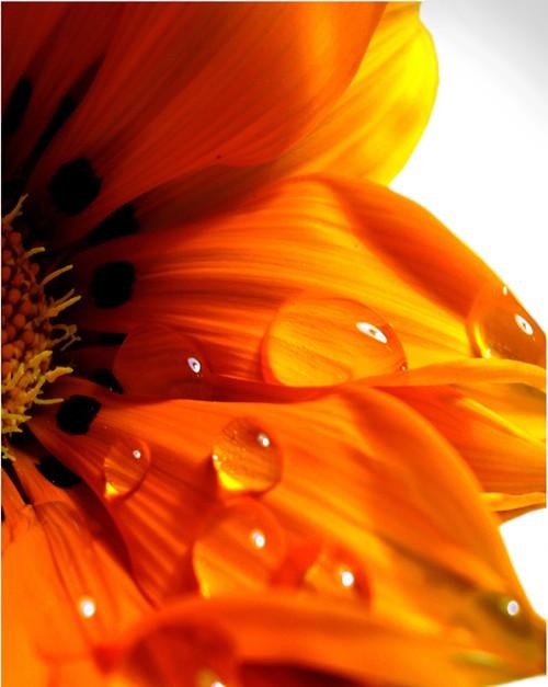 volim narančasto 1320