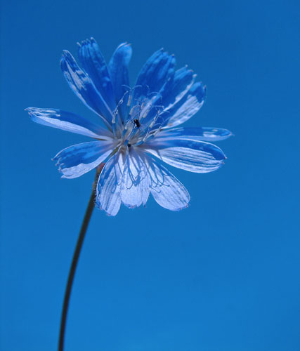 Plavo kao ... 517