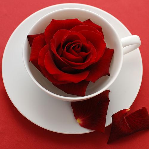 najromanticnija soljica za kafu...caj - Page 2 569