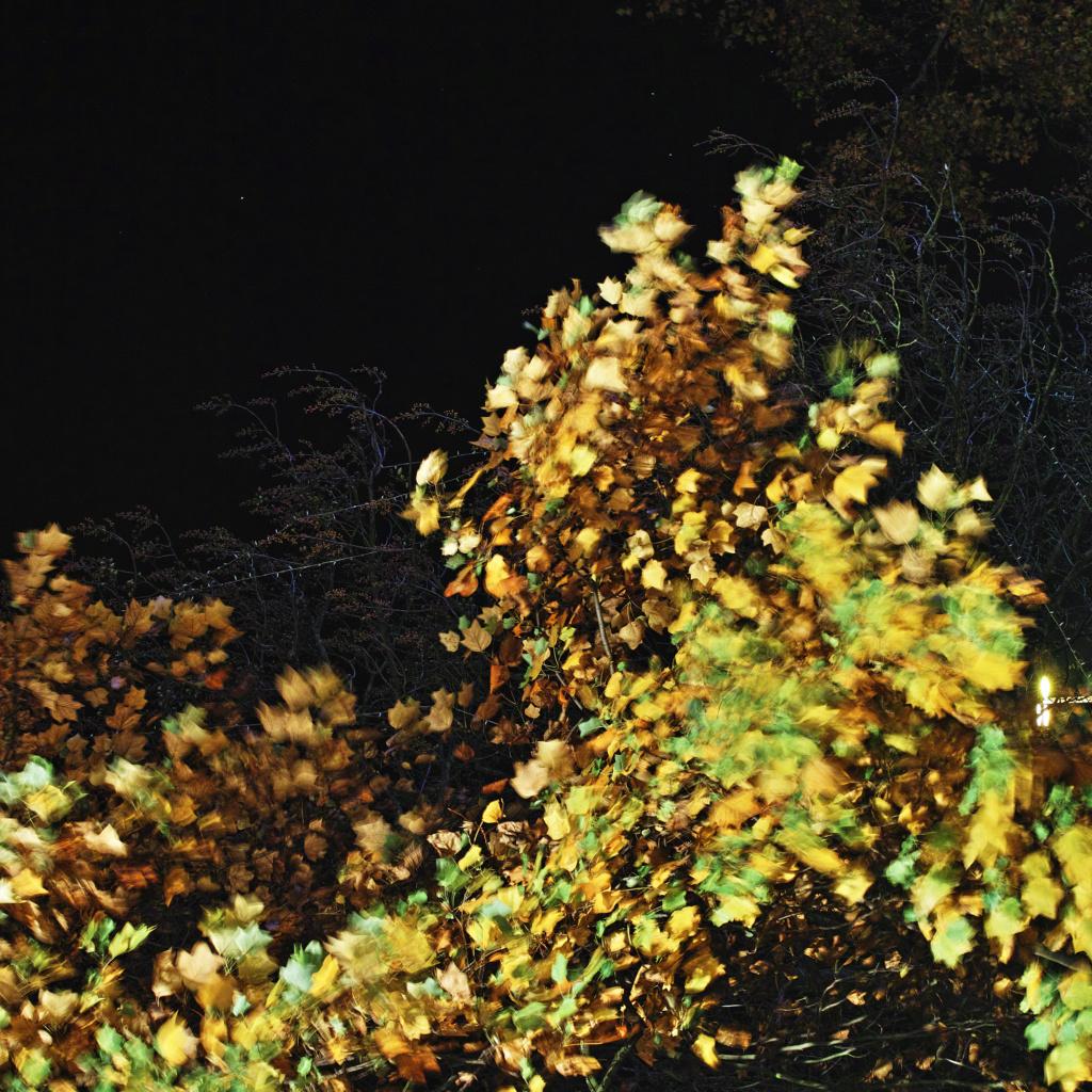 """thème du jeu de Novembre """"Couleurs d'automne"""" R11"""