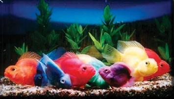 موضوع مهم عن الأسماك Liilas10