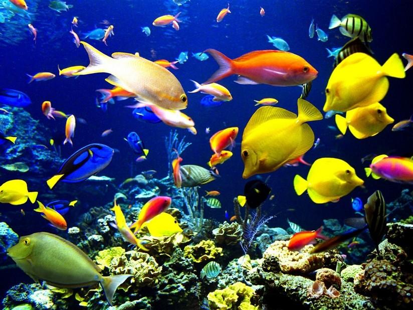 موضوع مهم عن الأسماك Water10