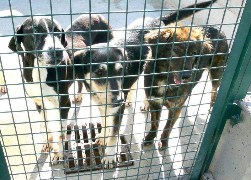 BARRY Croisé mâle REF (07) P1190613
