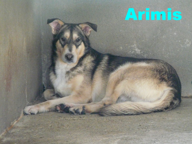 ARAMIS un mini x husky plein de charme  (07)5 ans DECEDE - Page 2 P1220915