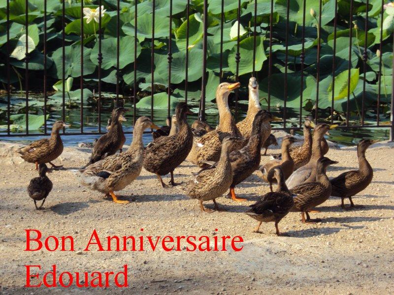Joyeux anniversaire Edouard Anived10