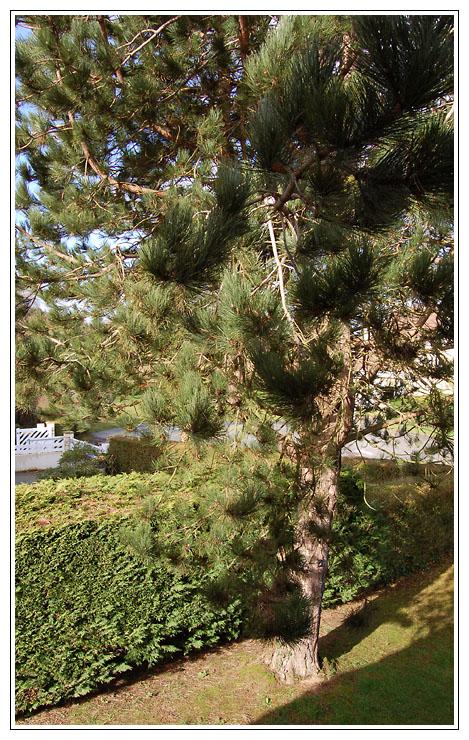 une vue de votre fenêtre (fil ouvert) - Page 2 Dsc_4810