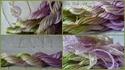 Ech. Fils Spéciaux (14e) - Envoi le 15 avril => PHOTOS - Page 2 Images18