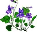 Cadeau de l'assoc Violet10
