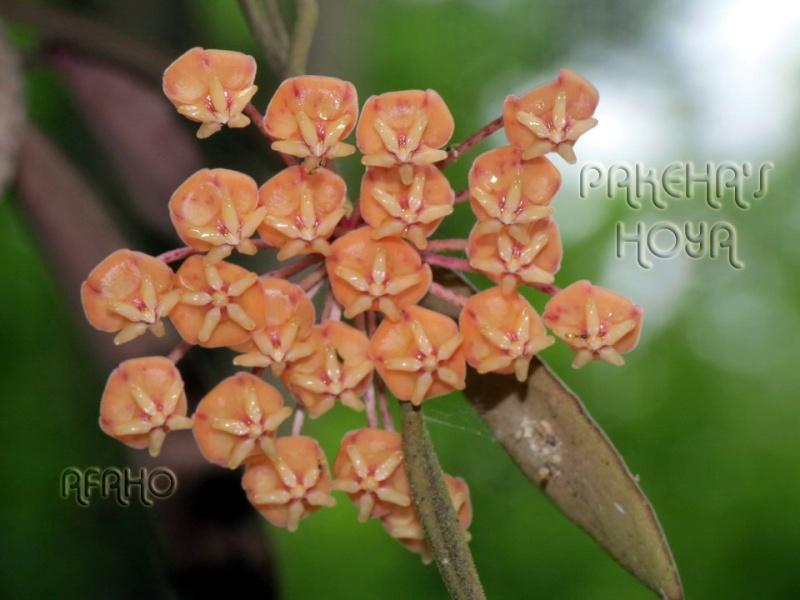 Borneo 2013 Img_5810