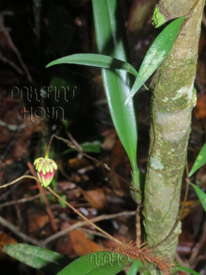 Borneo 2013 Img_6110
