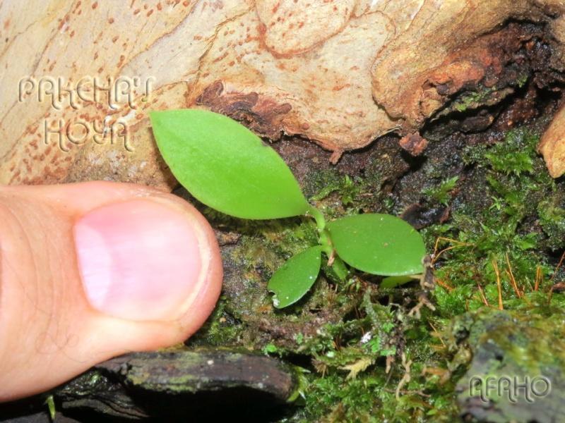 Borneo 2013 - Pagina 2 Img_6215