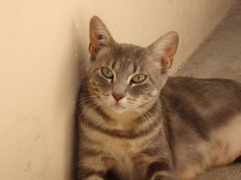 Adoption minet(te) Dsc03128