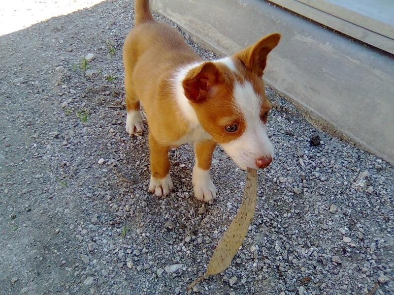 Cachorro!!! Imagem10