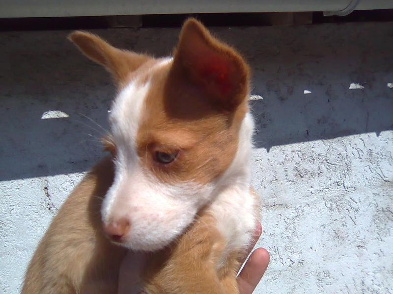 Cachorro!!! Imagem11