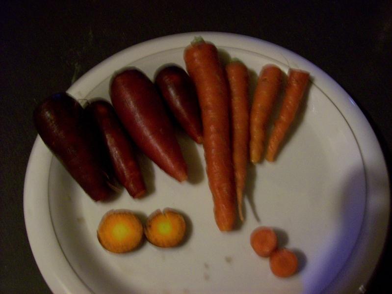 Production de votre potager 2009 100_1222