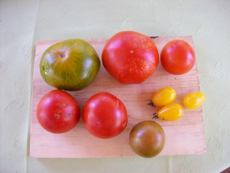 Production de votre potager 2009 100_1224