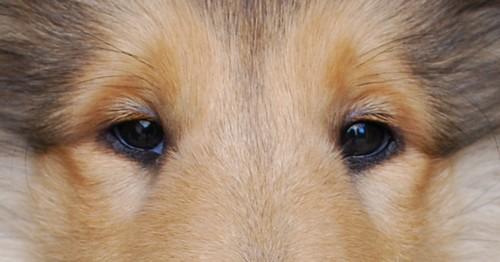 Les yeux. Synthèse des principales anomalies. Oeil210