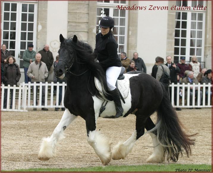 Une photo de vous et votre cheval - Page 7 Zevon_10