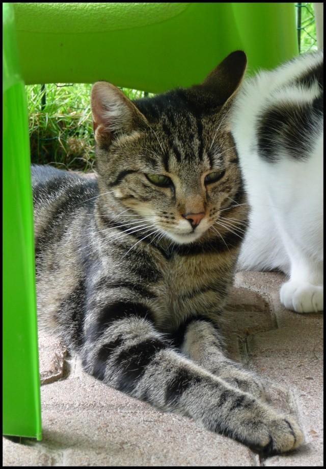 DOUCHKA (tigrée) Douchk13