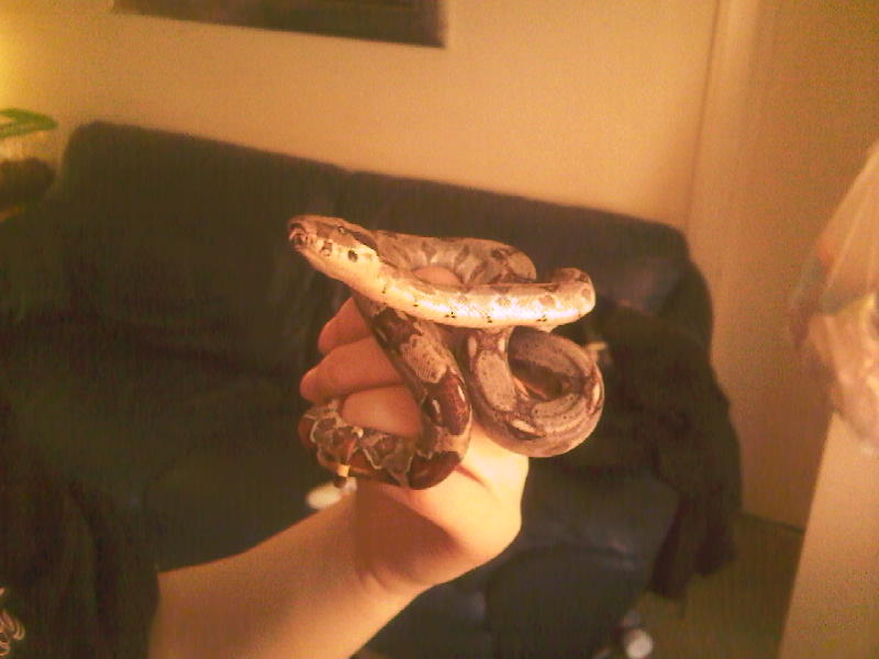 Another snake Photo-15