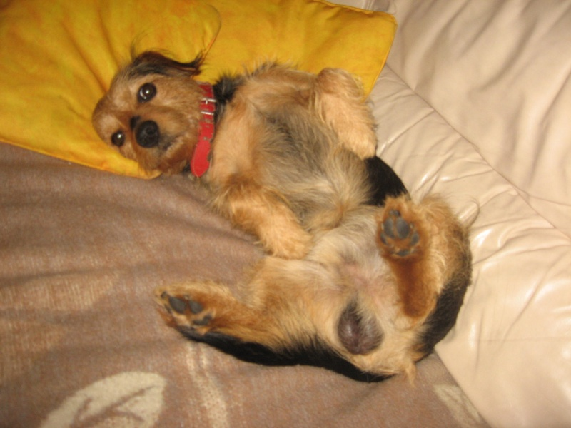 Photos de Réglisse....Ma petite chienne 3mois Img_2312