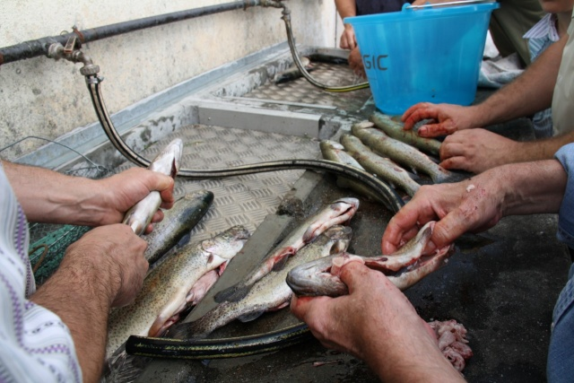 Pêche pour les enfants avec l'AAPPMA le 27 juin 2009 Img_2723