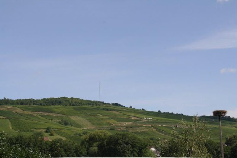 ferme - GAEC de la Mossig-Ferme Ostermann-Schneider à Wangen Img_3525