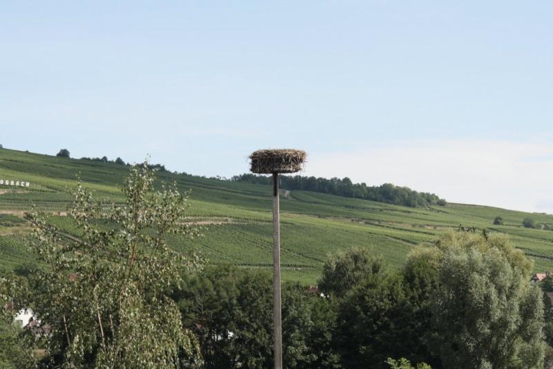 ferme - GAEC de la Mossig-Ferme Ostermann-Schneider à Wangen Img_3526
