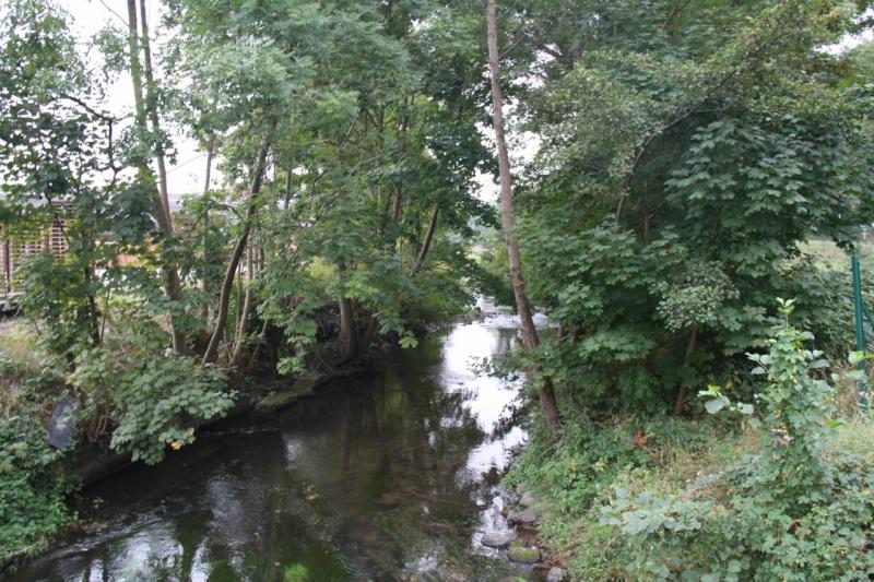 La Mossig , notre rivière Img_5035