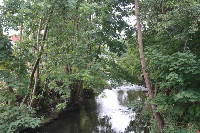 La Mossig , notre rivière Img_5043