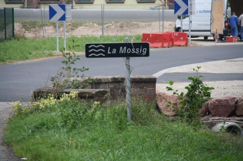 La Mossig , notre rivière Img_5044