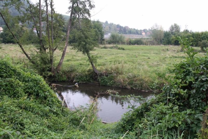 La Mossig , notre rivière Img_5045