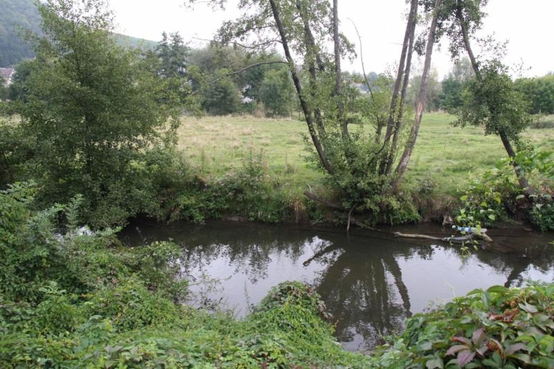 La Mossig , notre rivière Img_5046