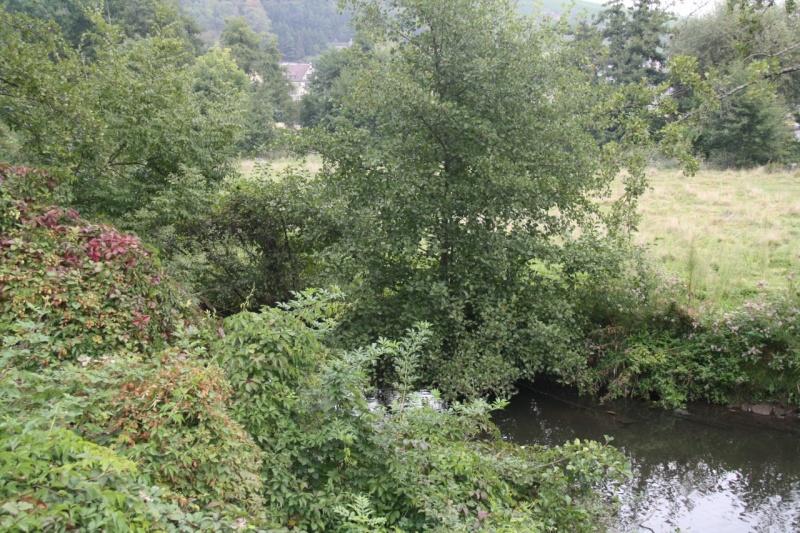 La Mossig , notre rivière Img_5047