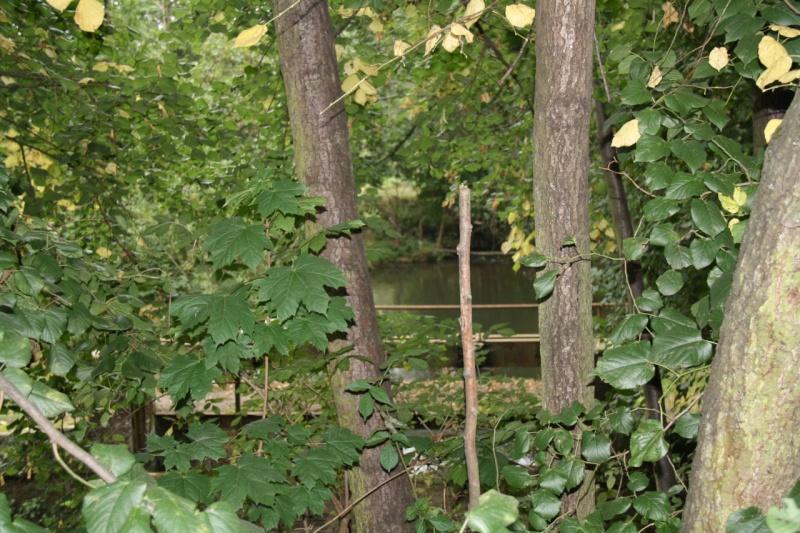 La Mossig , notre rivière Img_5050