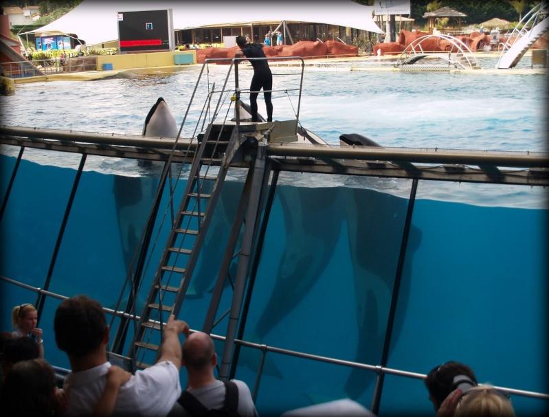 [photo] Comparaisons  impressionnantes orques / humains - Page 14 P1012210