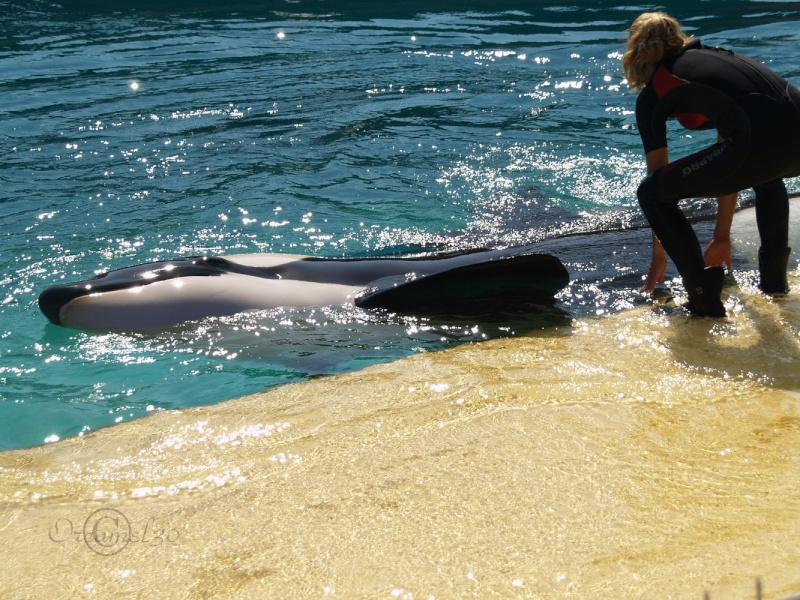 [photo] Comparaisons  impressionnantes orques / humains - Page 14 P1013510