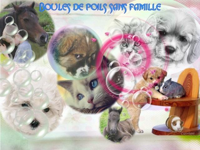 Boules de Poils sans Famille 89
